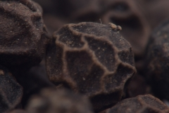 Black pepper grains in high res macro
