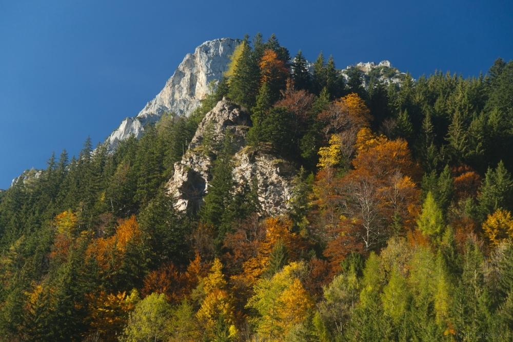 Autumn colors near Eisenerz