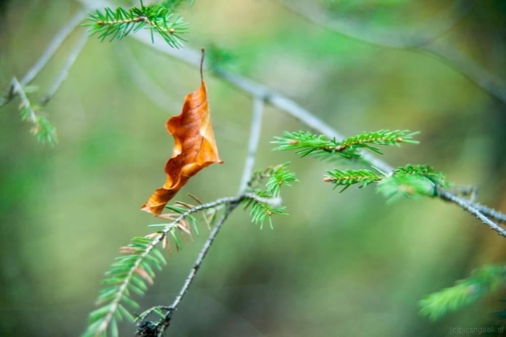 Leaf in mid air