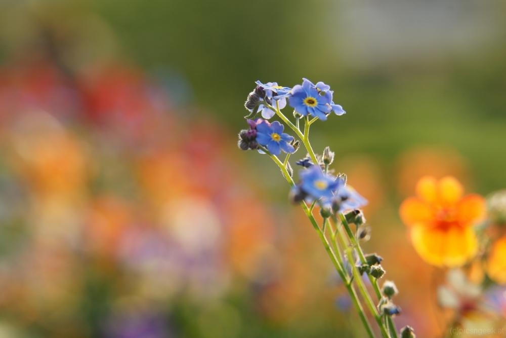 Flower mix of summer 1