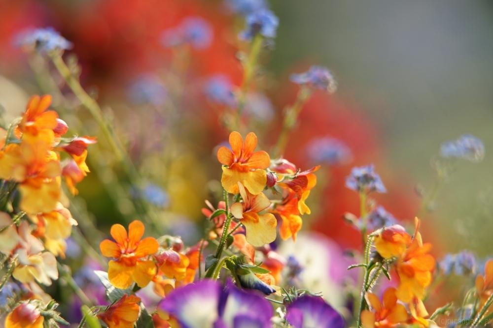Flower mix of summer 2